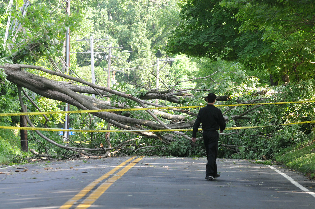 Description of . A man walks around a downed tree on Sproul Road in Villanova. Two downed trees have the road closed between Bryn Mawr Ave. and Conestoga Rd. Photo Pete Bannan